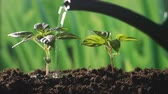 gotas : water the plants in the garden Stock Footage