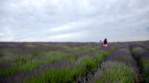 быстро : The child laughs and fun jumps. Long blond hair fluttering in the wind. Girl with purple ball runs through lavender field.