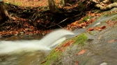 description : Beautiful autumn forest with fallen leaves and small clean river. Moving camera. Slider. Stock Footage