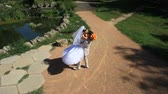 flirting : Wedding couple in a park after the ceremony on a sunny day Stock Footage