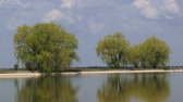 salgueiro : Beautiful willow growing on the bank of a lake.