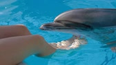 bottlenose : In the frame there is a young girl touching and petting funny grey bottlenose dolphin with her legs sitting near pool at dolphinarium.