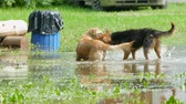 дворняжка : two stray dogs play in the pool of the park.