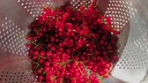 cachos : Red currant harvest. Washed bunches of red currant in colander. Female hand takes out bunches of currant from colander. Top view, close-up Vídeos