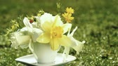 narcissus : yellow narcissus and wild spring flowers bouquet in a coffee cup instead of vase rotating in blurred grass background with copy space for your congrats text. Holiday greeting invitation card design. Stock Footage