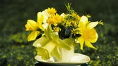 tea time : bouquet of yellow daffodils rotates on nature in a small coffee cup instead of a vase. concept of holiday greeting card.