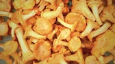 cantharellus : raw golden chanterelles rotating clode up top view Stock Footage