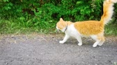 Cat walks along, and sniffs him and goes on. No panic and fear, just an ordinary meeting. Dostupné videozáznamy
