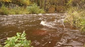 riverbank : Water stream in the autumn forest. Stock Footage