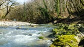 hızlı : The mountain stream runs in the spring forest, 4k.