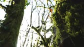 titokzatos : A large web on a mossy tree, 4k.