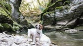край : A cute dog jack russell terrier sits in a canyon by the river, 4k. Стоковые видеозаписи