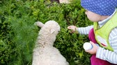 украшать : Little children play with a small sheep in the village, slow motion. Girl feeds the lamb