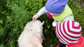 украшать : Little children play with a small sheep in the village. Girl and boy stroking a lamb