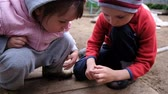 biedronka : Little children play with a ladybug. Kids treat insect on hand, slow motion Wideo