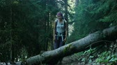 engel : Young woman tourist with a backpack steps over a fallen tree in the forest and smiling Stok Video