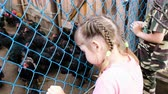 conserva : Small children look at hens and roosters in a cage on the farm