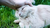 yalan : Man funny stroking a cat close-up, slow motion