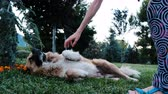 yardım : Woman strokes and scratches a chipped stray dog in the park