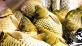 smlouvat : Live carp lie on the counter of the store and breathe gills