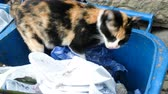 abandoned alley : Homeless street cat is looking for food in the trash container Stock Footage