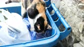 abandoned alley : Hungry cat is looking a food in the trash, animal digging in bags