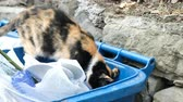 abandoned alley : Homeless cat looking for food in the trash and teeth tearing packages