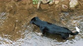 Dog standing in the river and watching the water is not moving, top view