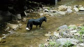 caught : Dog standing in the river and watching the water is not moving Stock Footage