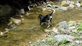 глупый : Stray dog stands with its paws in a pond, fishing and looks at the river