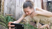 ovce : Girl takes a selfie with a sheep in a farm pen in the summer, the lamb chews grass