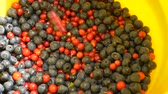 vitaminok : fresh juicy berries cranberries and blueberries poured into a bucket Stock mozgókép