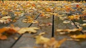mentira : golden leaves lie on wet boardwalk terrace low angle shot