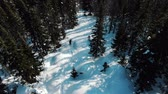 menő : people ski along white unspoiled snow in dense forest