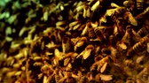 нектар : Bees Hard Working Swarming on Honeycomb Stylized Background HD