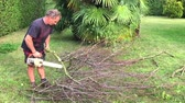 forest : Gardener cutting tree with chainsaw in the garden.