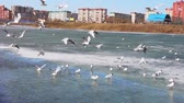 Sea gulls of the spring in the new district of a city