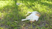 buta : funny cat lying and sleeping on the grassland