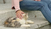 Woman touch on the cat at the garden
