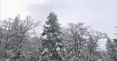 fitness : Shot of a winter scene and trees with snow on them, the shot is moving...