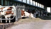 cowshed 1
