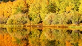 yansıma : Fall Colors, Vibrant Aspen Reflecting in Lake Stok Video