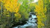 kalifornie : Beautiful Mountain River with Amazing Fall Colors