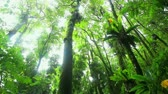 forest : Jungle Rainforest Stock Footage