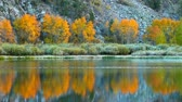 листва : Fall Colors, Vibrant Aspen Reflecting in Lake Стоковые видеозаписи