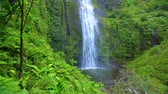 Majestic Lush Tropical Jungle Waterfall In Hawaii