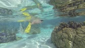 pod vodou : beautiful woman snorkeling in clear blue waters over coral reef in tahiti