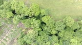 stodola : Beautiful top view of drone flies above green countryside with foliage of huge trees and green meadow