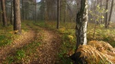 bashkortostan : Static view. Foggy morning in mountain forest. Stock Footage