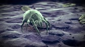 medical 3d animation of common dust mites